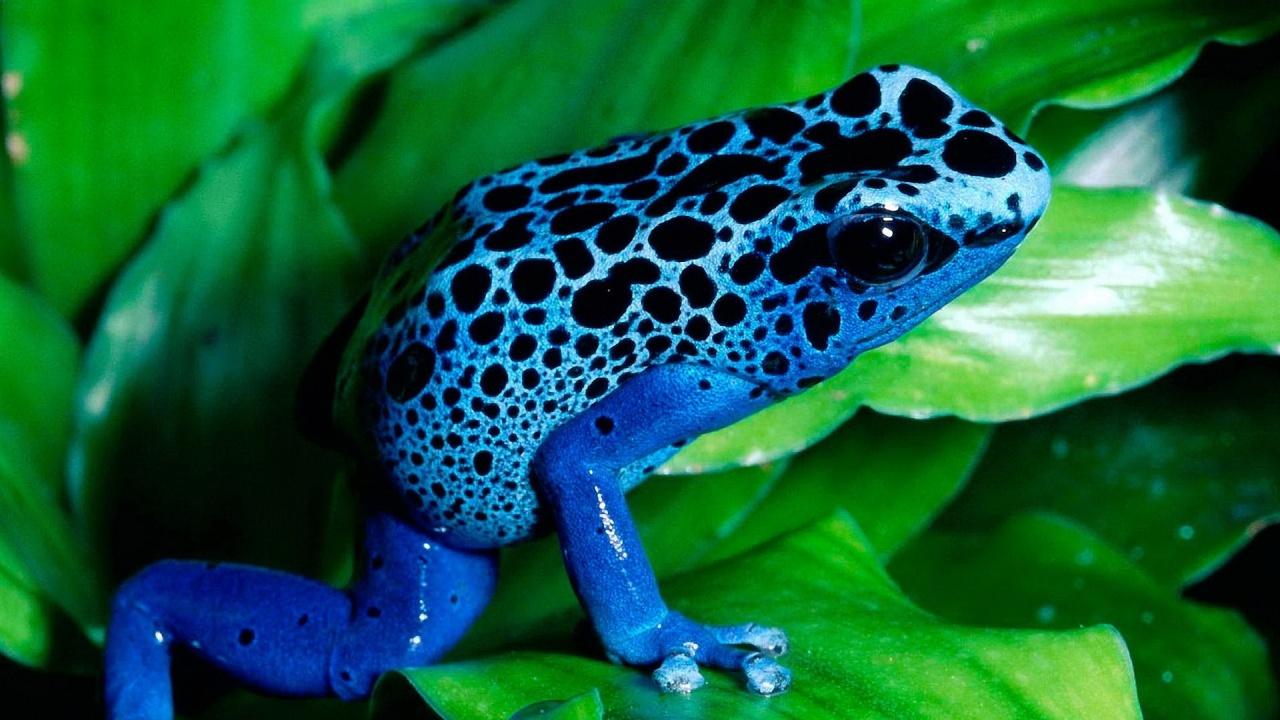 free frog wallpaper